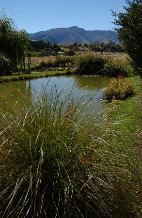 Queenstown Garden Tours: New Zealand evergreen natives and woodland plantings
