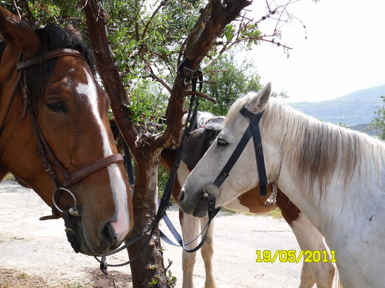Finikia Horseriding: Some of the horses