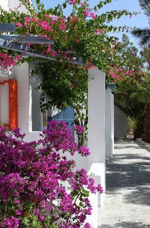 Meltemi Village: Garden view