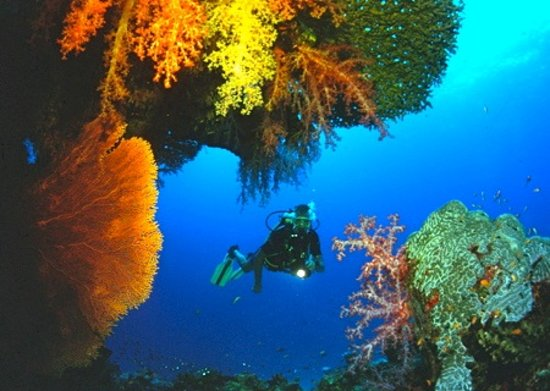 Sea Bees Diving - Chalong: Provided by Sea Bees Diving Thailand