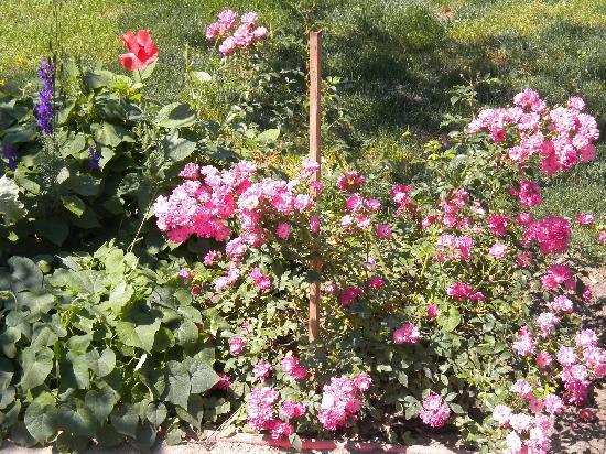 Danube Delta: fleurs en ete