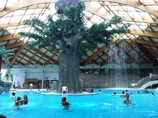 Catez, Slovenia: l'albero delle terme