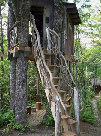 Cabins at Seven Foxes: Tree house