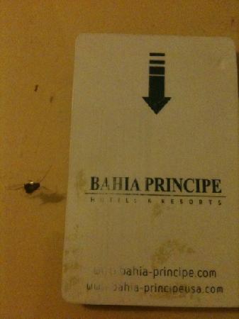 Grand Bahia Principe Cayacoa: ne perdez pas votre pass de chambre il sert aussi a ecraser les cafards