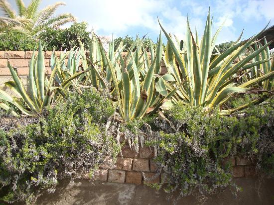 Bed & Breakfast S'Alzolitta: agave al sole vicino alla spiaggia è novembre