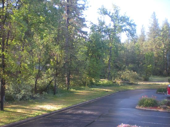 Americas Best Value Inn Yosemite-Oakhurst : View from our window