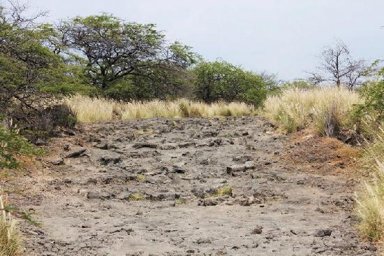 Makalawena/Pu'u Ali'i: The crazy 4WD road