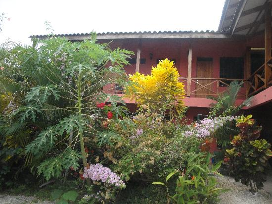 Cabinas Calocita: The nice little garden