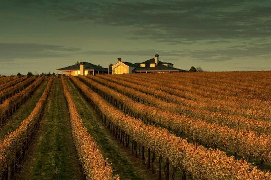Walla Faces Inns at the Vineyard : Estate vineyard just after harvest, but before leaves have fallen