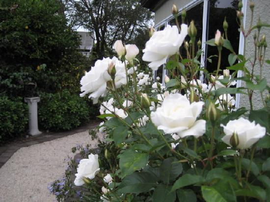 Finlay Banks Boutique Bed & Breakfast: Peaceful rose garden