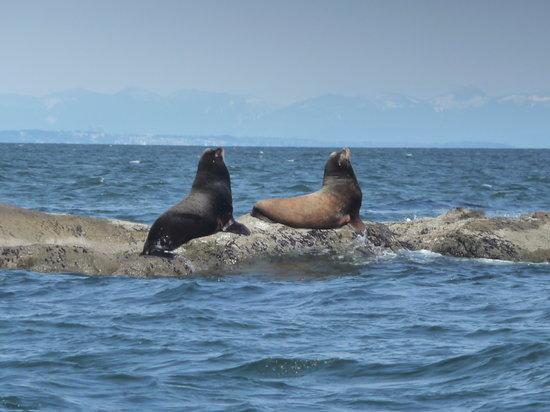 Gulf Island Safari: The sea lion rock
