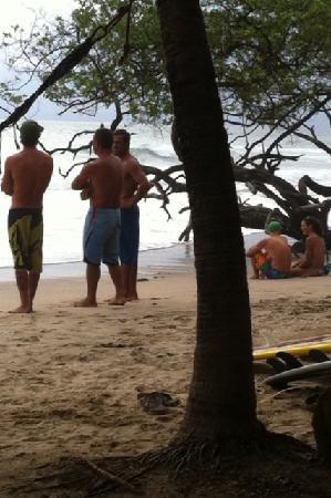 Cafe Playa Negra: Surf Check