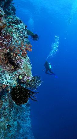 Vatulele Island Resort: Wall dive Vatulele