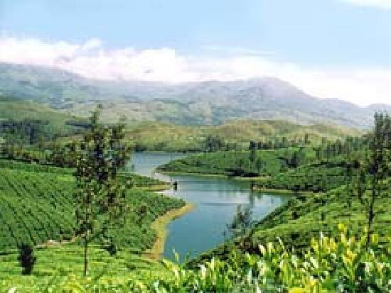 Bellmount Resorts: a cool view of munnar