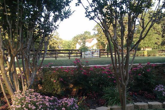 Centaur Arabian Farms: Backyard pool