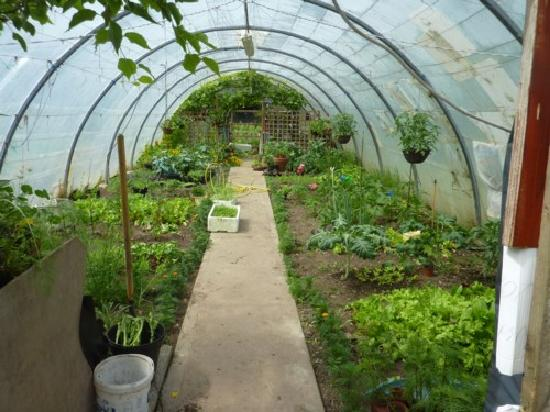 The Mustard Seed at Echo Lodge : The green house at Echo Lodge