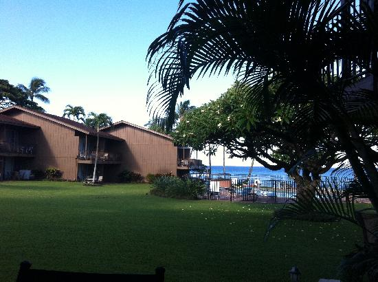Polynesian Shores Condominiums: grounds in middle of condos