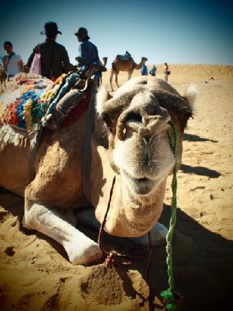 Dar Charkia: 砂漠にて