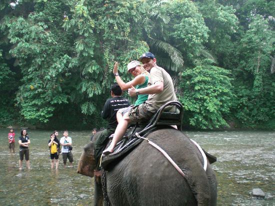 Bukit Lawang, อินโดนีเซีย: Elefanten in Tangkahan