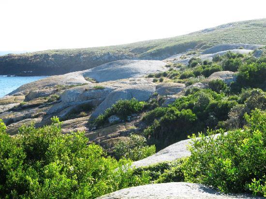Montague Island Tours Reviews