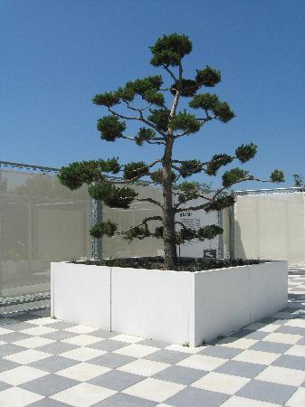 Terra Botanica : Des arbres magnifiques