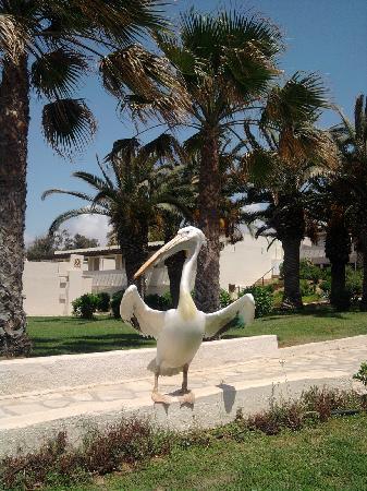 Nissi Beach Resort: The hotel's pelican