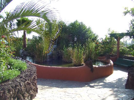 Costa del Silencio, إسبانيا: tranquil hidden garden