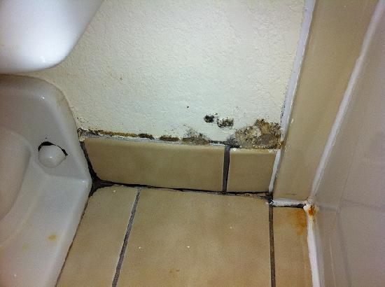 Quality Inn: mold in bathroom