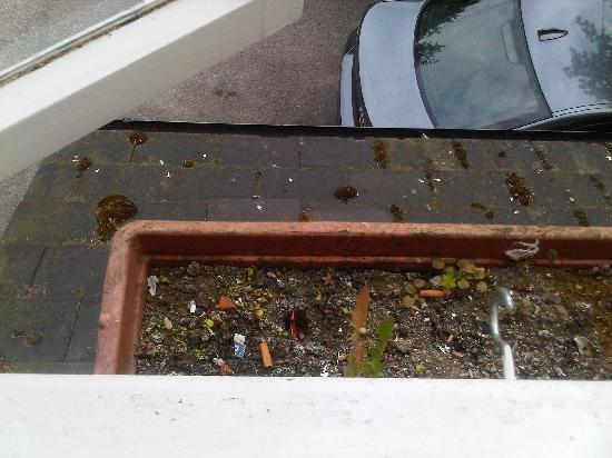Sudbury, UK: Window Box