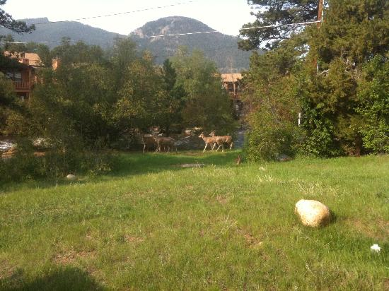 Brynwood on the River: Mule deer just grazing in the backyard