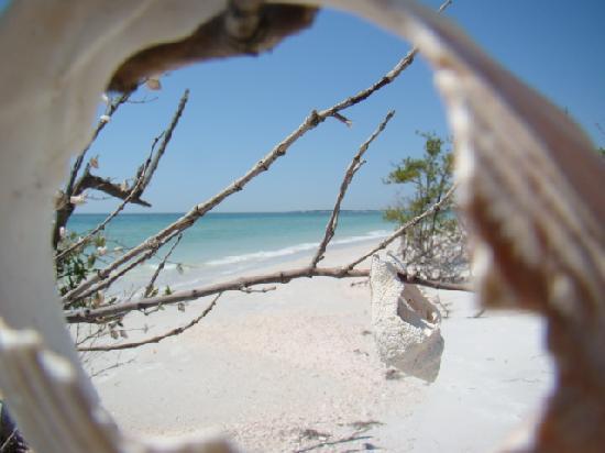Caladesi Island State Park: CALDESI 05/11