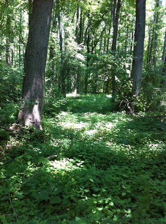 delaware: Bear Swamp Trail at Bombay Hook