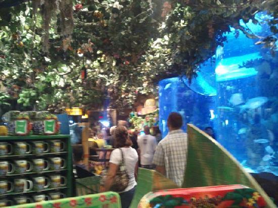 Rainforest Cafe: gift shop