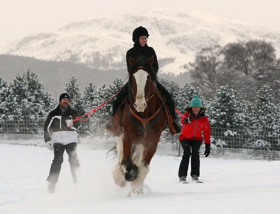 Newtonmore Riding Centre: Ski Joring at NRC