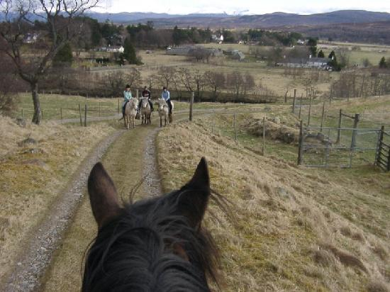 Newtonmore Riding Centre: Through the ears view from horseback