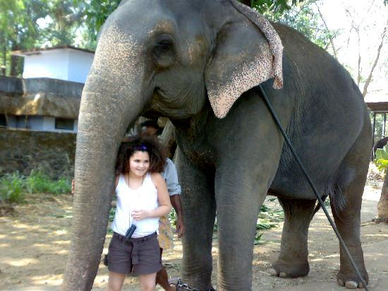 Muziris Heritage - Day Tours: elephants sanctuary