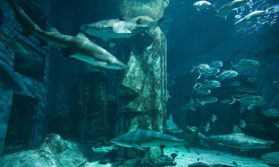 Sharks Picture Of Sea Life London Aquarium London