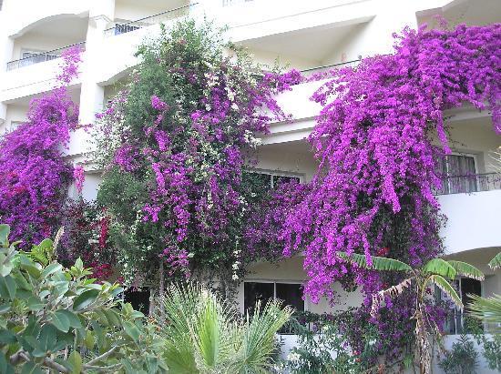African Queen Hotel: Merveilleuses façades fleuries