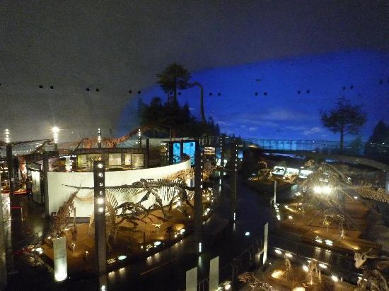 Fukui Dinosaur Museum: 全体