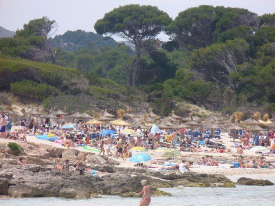 Cala Agulla Cala Ratjada Bild Von Cala Rajada Mallorca