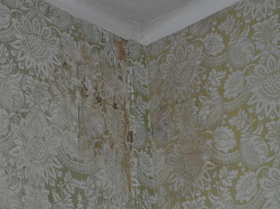 Alexander Hotel London: pareti in pessimo stato