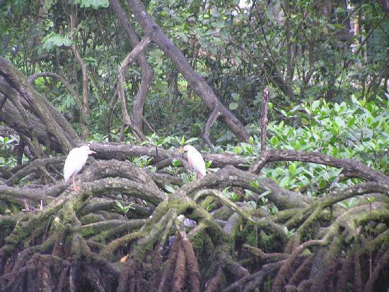 Njoy tours: de mangrove