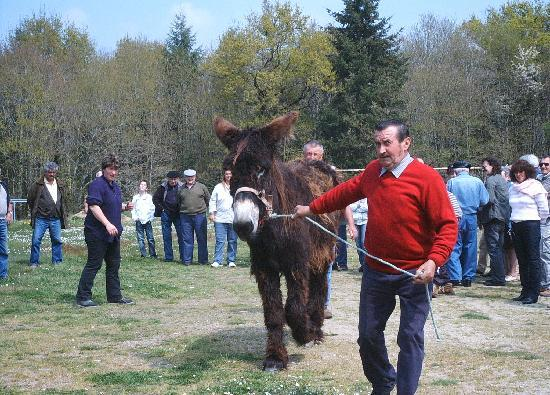 Comme Je Trouve: A local event, the Donkey sale and festival.