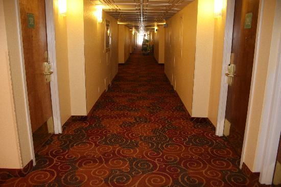 Red Lion Hotel Farmington: Newly carpeted hallway