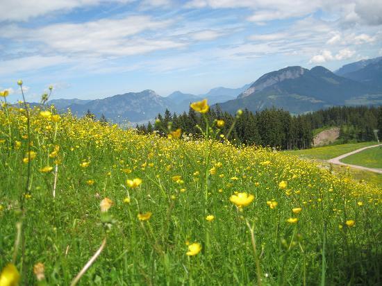 Hotel Sonnschein: so many wonderful meadows