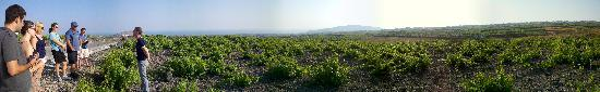 Santorini Wine Tour: panoramic