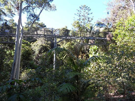 Tamborine Mountain, Australië: Sky Walk at Mt Tamborine