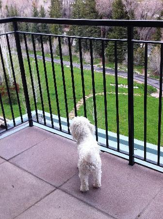 Inn and Suites at Riverwalk: Doggie enjoying patio of the condo
