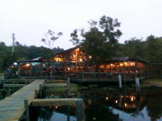 Majestic indian tiger picture of clark 39 s fish camp for Clark s fish camp seafood restaurant