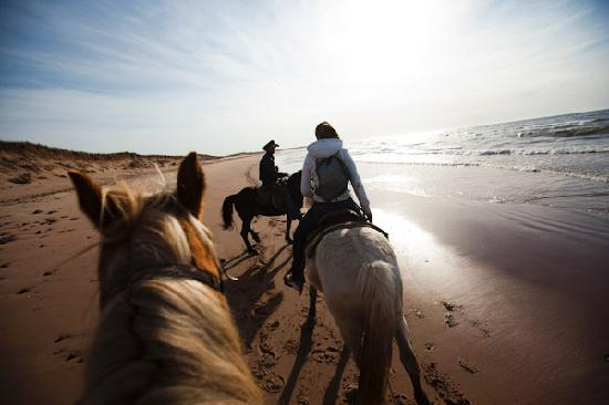 Lakeside, Canadá: A private ride on the beach with Circle T Trail Rides.